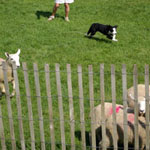 Canada Sheep Dog Trials