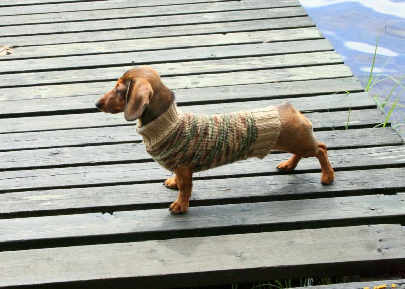 Cute Dog Sweater!