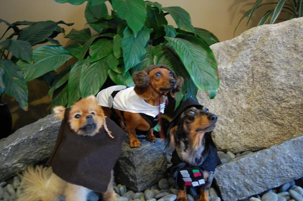 Make Star Wars Halloween Costumes for Dogs